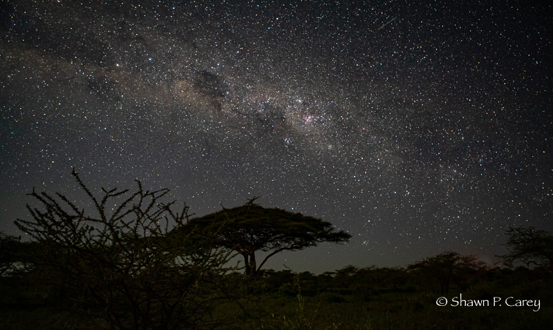 View of night sky from Ndutu Lodge, Tanzania.